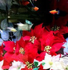 水天宮前駅の水槽がクリスマス。 #クリスマス#aquarium