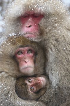 Mother and Children by Masashi Mochida - Photo 173762299 / 500px