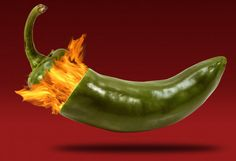 Make 'em hot, hotter, and hottest! Gardeners who just can't get enough of the fire of a capsaicin-rich pepper are always on the lookout as to how to grow hotter peppers. Heat can be a tricky thing when it comes to peppers, especially when you realize that the heat of individual fruits that grow on the …