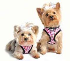 www.pampered-pet-palace.com