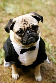 Adorable pet tuxes; would be super cute if you wanted to have your dog in your wedding....I can see it now, Ralphie in a tux :)