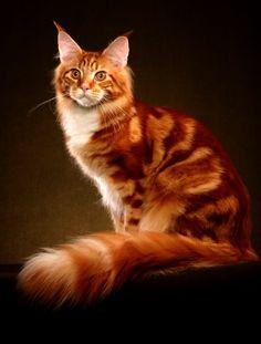 Gatos LightningClan - Una nueva era