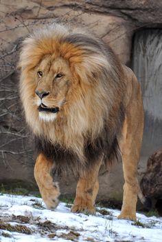 """""""http://animalsafari.tumblr.com/post/52676611885"""" (quote)"""