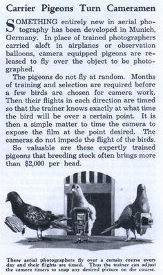 Carrier Pigeons Turn Cameramen (May, 1936)