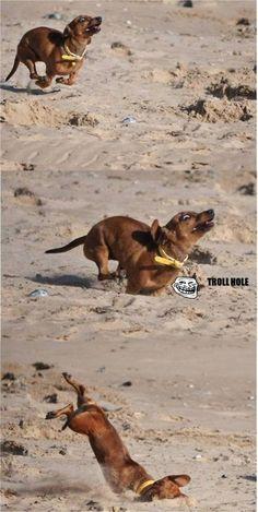 ahahahaha! Poor dog
