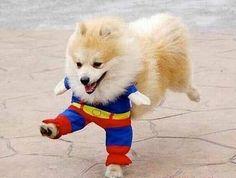super dog! found on google search