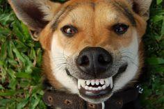 dientes 1