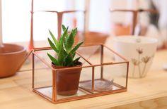 De zon laat het een beetje afweten vandaag. Alle reden om het binnen weer gezellig te maken! Fijn weekend! Ps. Nog meer mooie glassboxen natuurlijk in de winkel, maar ook in de webshop (www.vanelles-webshop.nl)  #glassbox #decoration #decorate #woonaccessoires #interiør #interieur #woondecoratie #cactus