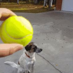 dog doesn't care about your ball