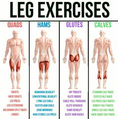 Leg And Glute Workout, Leg Workout At Home, Hamstring Workout, Leg Day Workouts, Workout List, At Home Workouts, Muscle Groups To Workout, Muscle Building Workouts, Building Leg Muscle