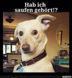 Hab ich saufen gehört!? | Lustige Bilder, Sprüche, Witze, echt lustig