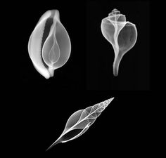 CultCase: X-Ray Photography as Art: Hidden Faces of The Inner Space