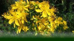 Body-Dorn-Breuss Methode|LIFETOWER Plants, People, Flora, Plant, Planting