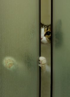 Someone is worried about you getting all wet in the nasty shower...