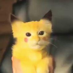 Pikachu - New Ideas Funny Cute Cats, Cute Cat Gif, Cute Funny Animals, Cute Baby Animals, Pikachu Pikachu, Crazy Cat Lady, Crazy Cats, Pokemon Mignon, Cat Costumes
