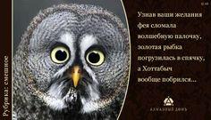 С Алмазный Домъ www.almaz-dom.ru/ сбываются любые ваши грёзы: для каждого из вас россыпь драгоценных камней в союзе с благородными металлами словно соперничают с сиянием звезд, играя и переливаясь всевозможными оттенками цвета. #Смешное #Юмор