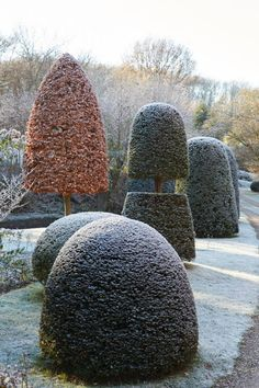 03_Frosted_topiary_©Britt_Willoughby_Dyer_P510_N6557