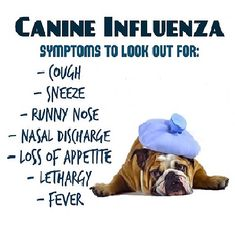"Public Health Seattle & King County issued this notice today saying they may have identified a new strain of canine influenza in the area that has sickened ""more than a thousand dogs"" in several other states. They discovered the strain, H3N2 canine influenza, after dogs at a local boarding and dog  daycare facility ""began getting sick with respiratory symptoms, …"