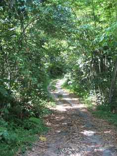 The path to love. Forests, Paths, Artisan, Country Roads, American, Woodland Forest, Craftsman, Woods