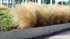ADEZZ planters & more