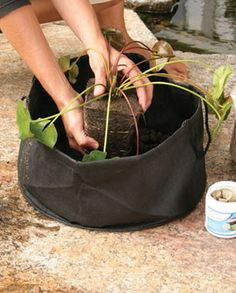 Aquatic Planters are ideal for all pond plants. The fine porous material allows water in, but keeps soil from entering your pond. The flexible material makes it simple to place the plants where plasti