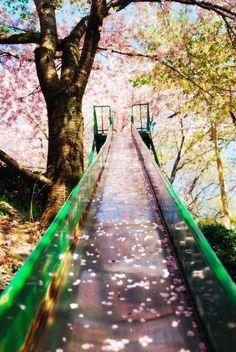 cherry blossom slide, sakura, japan by cristina