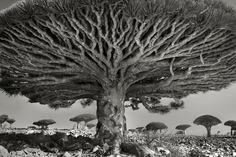 14 Yıl Boyunca Dünyanın En Görkemli Ağaçlarını Kadrajına Sığdıran Biri- Beth Moon | Sanat Karavanı