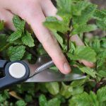 11 Insider Secrets For Growing The Most Flavorful & Abundant Herbs