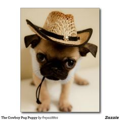 The Cowboy Pug Puppy Postcard
