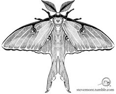 Tattoo design commission of a Luna Moth. Something a little different for me, I haven't stippled since college.
