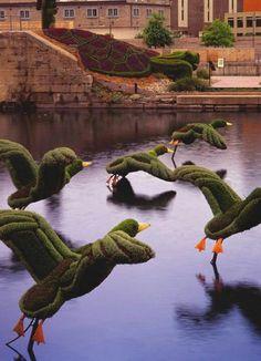 Envol de colverts: Flight of the Mallards - Mosaïcultures Internationales de Montréal Formal Gardens, Unique Gardens, Amazing Gardens, Beautiful Gardens, Topiary Garden, Garden Art, Garden Plants, Garden Design, Plant Art