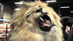 DEMAND President Zuma CRACK DOWN on thise vile industry NOW! Every single day in South Africa at least 2 to 3 captive bred or tame lions are being killed in canned hunts. And hundreds more are slaughtered annually for the lion bone trade. Please Sign & Share Virally In OUTRAGE! http://www.thepetitionsite.com/826/901/761/ask-s-africa-president-to-increase-resources-in-protecting-lions/?taf_id=14210145&cid=fb_na#