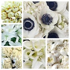 What are those on top right?! Beautiful!! Ha! They are anemones
