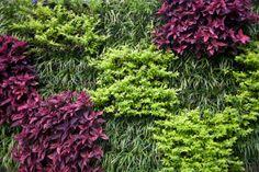 #Giardino verticale - #vertical#green #living#walls - #perliwall - www.perligarden.com