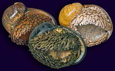 Scaly-foot gastropod, the metal-coated bastard of the sea. - Album on Imgur