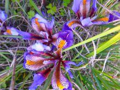 wandelvakanties-griekenland-en-eiland-6 Plants, Crete, Plant, Planets
