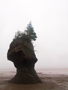 The Bay of Fundy; I learned about this bay in my Geography class, the mystery of it intrigues me along with it being a place not visited that often...because not many people know about it...
