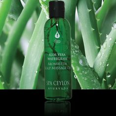 This season, with #Aloe #Vera #Water #Grass, flash your #smooth and #shiny tresses http://spaceylonhyderabad.blogspot.in/2017/04/goodness-of-aloe-vera-water-grass.html … #Hyderabad #Ayurveda #beauty #spa