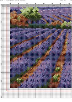 fields of lavender-5