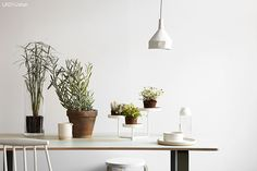La maison dAnna G.: New dusty shades from Jotun Lady Decor, Interior, Indoor Planters, Nordic Design, Inside Garden, Green Living, Plant Life, Jotun Lady, Indoor Plants