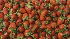 Kaffesump: 11 smarta saker du kan göra med den! | Leva & bo Strawberry, Strawberry Fruit, Strawberries, Strawberry Plant