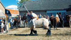 Ringrijden // Ringsteken // Oostkapelle // Zeeland Een supermooi evenement is het Ringrijden in Oostkapelle, Zeeland. Als je de kans hebt: ga kijken!   Bsharp Media Gepubliceerd op 7 okt. 2017 Tube, Films, Horses, Animals, Nostalgia, Animales, Movies, Animaux, Cinema