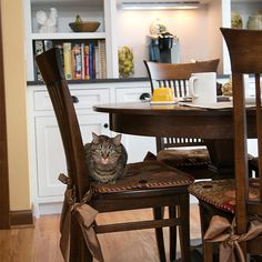 cat sitting in new kitchen chair Cabinet Companies, Cat Sitting, Kitchen Chairs, Custom Cabinets, New Kitchen, Countertops, Kitchen Remodel, Corner Desk, Flooring