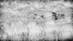 moutons-sheep_3981 Photo Look, Sheep, Painting, Art, Animaux, Art Background, Painting Art, Kunst, Paintings
