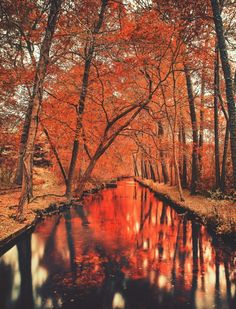 year round autumn & halloween