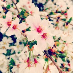 Blossoms