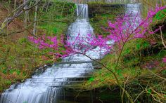 Fall Hollow Falls - NATCHEZ TRACE PARKWAY Travel Around The World, Around The Worlds, Natchez Trace, Water Water, Nice Place, Pigeon Forge, Summer Ideas, Along The Way, Vacation Ideas