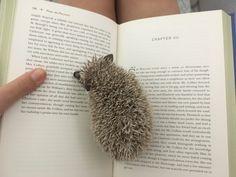 Hedgehog House, Hedgehog Pet, Cute Hedgehog, Animals And Pets, Baby Animals, Funny Animals, Todays Mood, Super Cute Animals, Cute Wallpaper Backgrounds