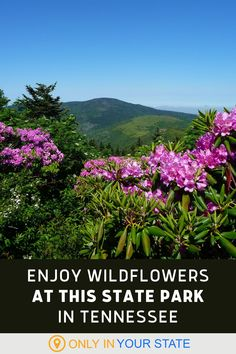 Enjoy beautiful wildflowers, camping, and hiking at this Tennessee State Park. It's the perfect spring destination for nature lovers. Tennessee State Parks, Tennessee Vacation, Spring Break Vacations, Mountain States, Great Smoky Mountains, Natural Wonders, Day Trips, Adventure Travel, Wild Flowers