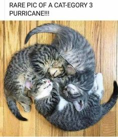 37 Great Pics And Memes to Improve Your Mood #KittenPile #Kittens #Adorable